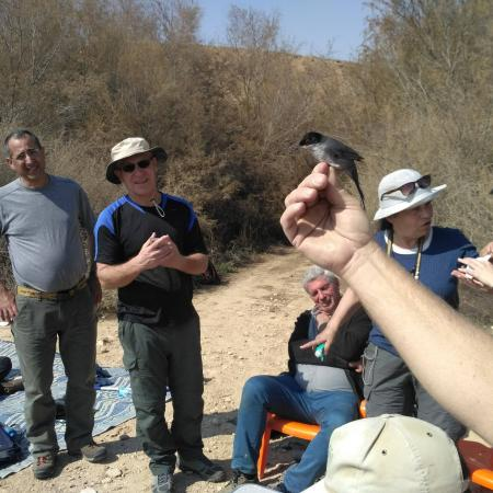 Guy watches a ringed warbler